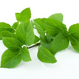 Thai Basil isolated on white background