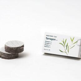 tarragon-pods