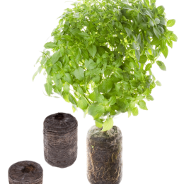 seed-pod